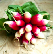 Radishes are great for weight loss